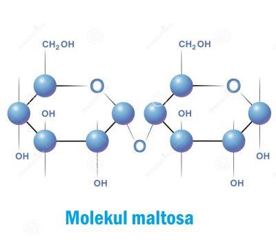 molekul maltosa